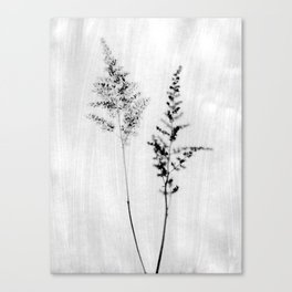 Delicate Black and White Botanical Photograph Canvas Print
