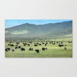 Tibetan Yaks in Sichuan, China Canvas Print