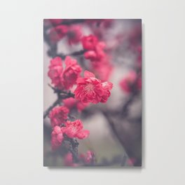 Pink Peach Blossoms Metal Print