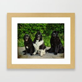 Three Faces of Love Newfoundlands Framed Art Print