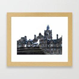 Seagulls of Edinburgh Scotland Framed Art Print