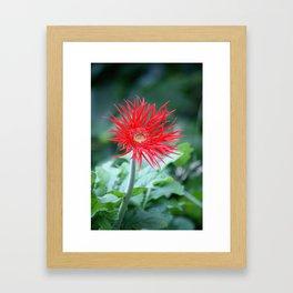 Red Hot Daisy Framed Art Print