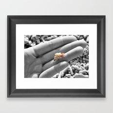 I caught myself a baby hermit crab... Framed Art Print