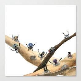 Maratus Mating Displays 1 Canvas Print
