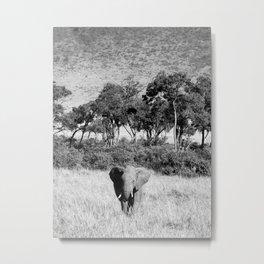 Elephant in Maasai Mara Metal Print