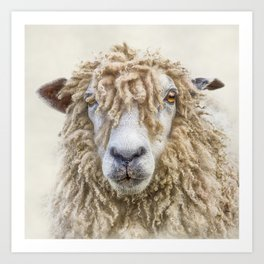 Longwool Sheep Art Print