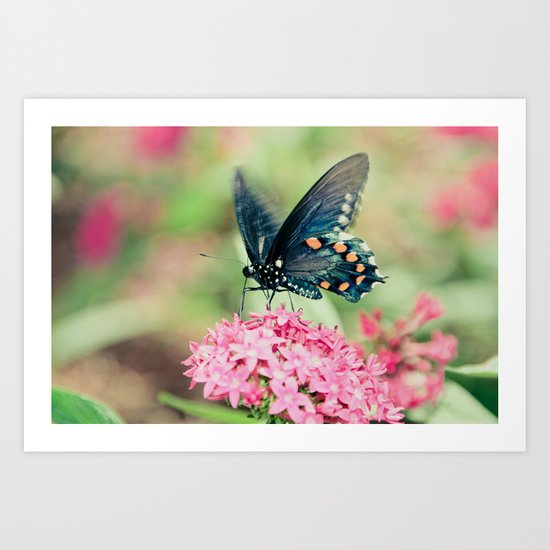 Spring Butterfly Art Print