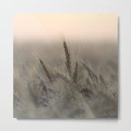 Morning Dew on Wheat Field Metal Print
