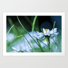Cold Flower Art Print