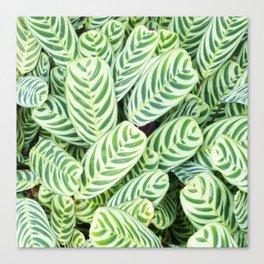 Botanical green white natural tropical leaves Canvas Print