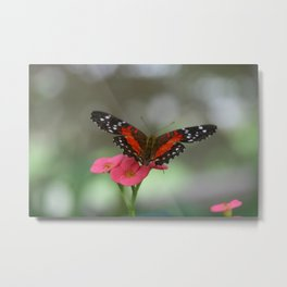 Butterfly House 2 Metal Print