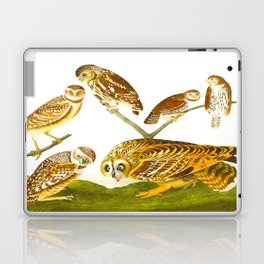 Burrowing Owl Illustration Laptop & iPad Skin