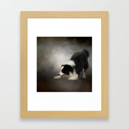 Ready to Play - Border Collie Framed Art Print