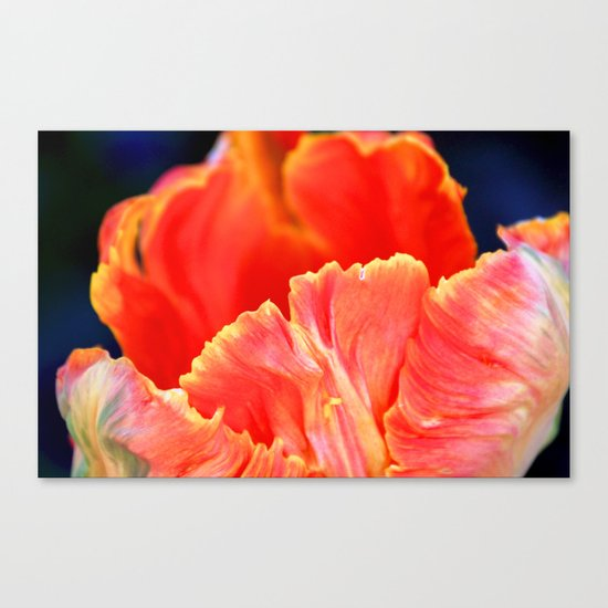 Fire orange bloom Canvas Print