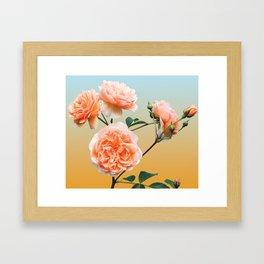 Gradient Roses Framed Art Print