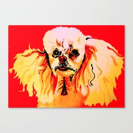 Toy Poodle portrait in red Canvas Print