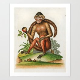 Bush-tailed monkey by George Edwards, 1761 (benefiting The Nature Conservancy) Art Print