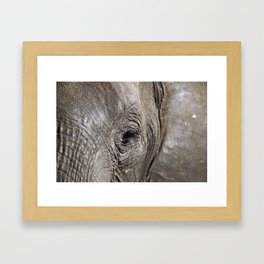 Eye of the elephant, Africa wildlife Framed Art Print