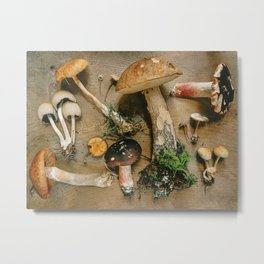 Little Mushrooms Metal Print