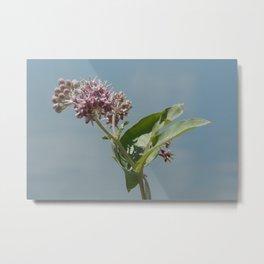 Summer milkweed flowers Metal Print