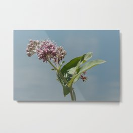 Summer milkweed flowers Metal Print