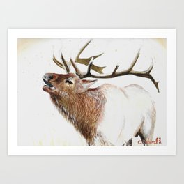 Bull Elk-19 Art Print