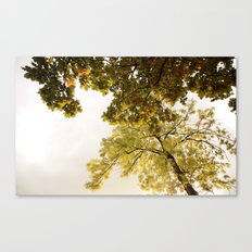 This fall with dreams Canvas Print