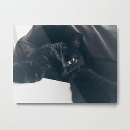 Kitty Play Metal Print