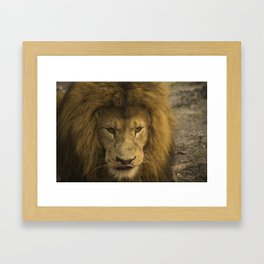 Lion - Time To Eat Framed Art Print