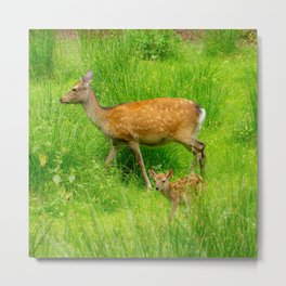Mother and child - fallow deer with young Metal Print