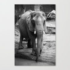 Gentle One Canvas Print
