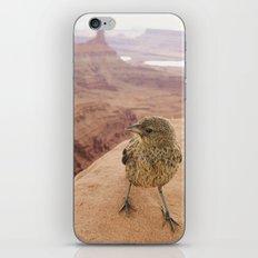 Desert Bird iPhone Skin