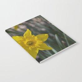 Daffodils 1 Notebook