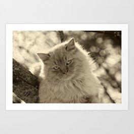 Sunlit Cat in Sepia Art Print