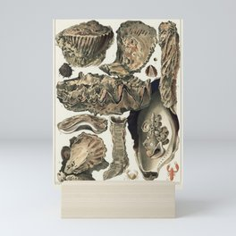 Great Barrier Reef Oysters from The Great Barrier Reef of Australia (1893) by William Saville-Kent ( Mini Art Print