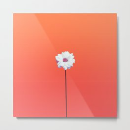 Summery Sunset Orange Gradient and White Daisy Metal Print