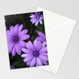 African daisy madness Stationery Cards