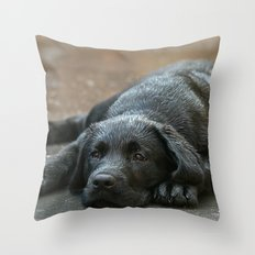 Labrador dog in the rain ! Throw Pillow