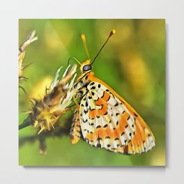Spotted Fritillary Orange and White Butterfly Metal Print