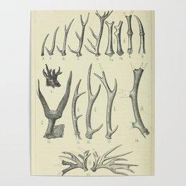 Vintage Antlers Poster
