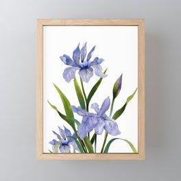 Purple Iris Framed Mini Art Print