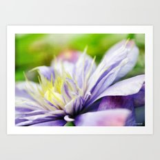 Painted Clematis Art Print