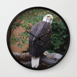 National Aviary - Pittsburgh - Bald Eagle 6 Wall Clock