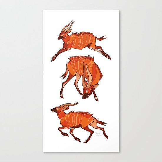 Bongo Antelope Canvas Print