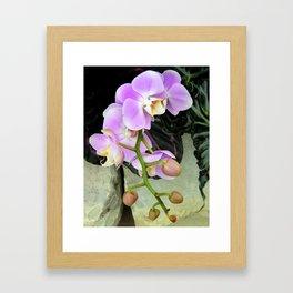 Orchids on the Rocks Framed Art Print