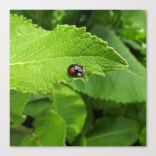black ladybug I Canvas Print