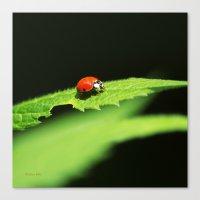 ladybug Canvas Prints featuring Ladybug by Christina Rollo
