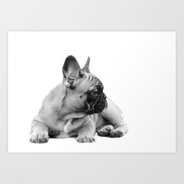 FrenchBulldog Puppy Art Print