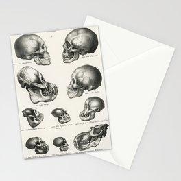 Human Monkey and Ape skulls from Volledige Natuurlijke Historie der Zoogdieren(1845) by schinz de Visser Stationery Cards