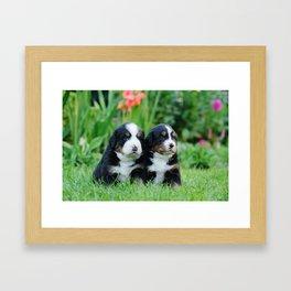 Bernese Mountain Dog puppies Framed Art Print